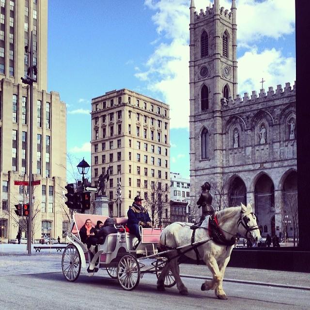 horses-montreal-1
